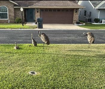 lhe-family-cranes